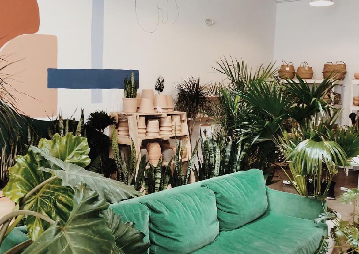 flora plant shop